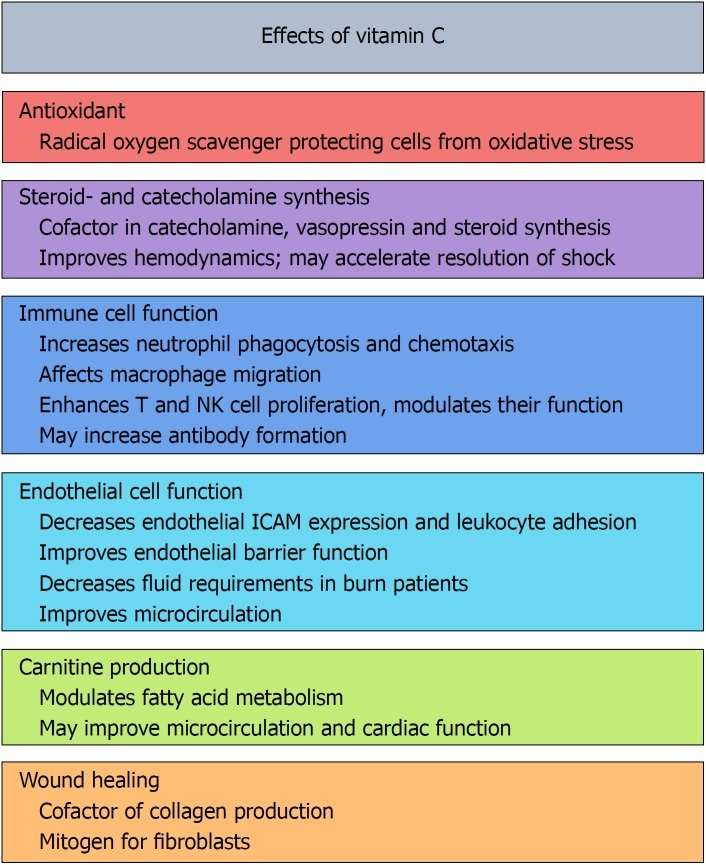 effects of vitamin c across the body